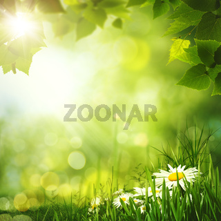 Beauty summer forest backgrounds for your design