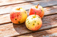 Three apples on the old weathered wooden table