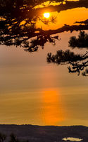 Sunset against pine tree and the sea.