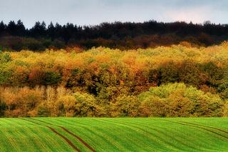 Reinhardswald im Herbst