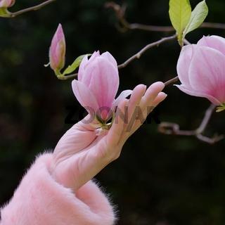 eine Hand hält eine Magnolienblüte