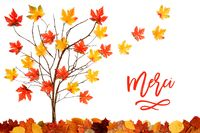 Tree With Colorful Leaf Decoration, Leaves Flying Away, Merci Means Thank You