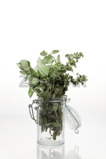 Frischer Oregano in Glasbehältnis vor neutral weißem Hintergrund
