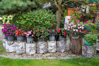 Red New Guinea impatiens flowers in pots