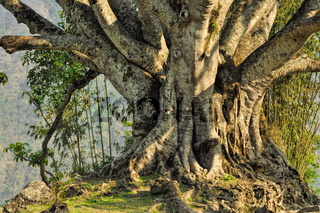 Breathtaking view of a huge old tree standing on a hill