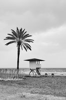 Beach with palm tree in low season