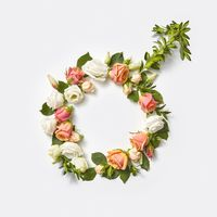 Male sign made from flowers.
