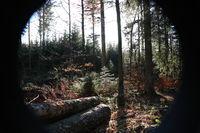 Herbsttag im Hochschwarzwald