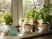 The set of different plants is decorating the kitchen window sill