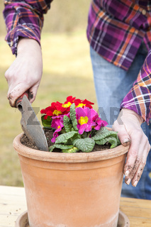 Woman at transplanting of flowers