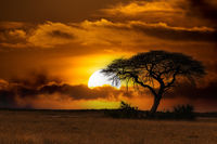 African sunset over acacia tree