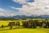 Panorama im Allgäu mit Wiese und Bergkette