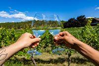Okanagan valley vineyard grapevine wine