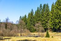 Auf dem Rothaarsteig unterwegs durch den Wald im Sauerland