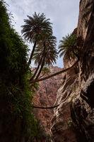 Palmen in einer Schlucht