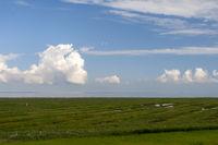 Salzwiesen an der Nordsee