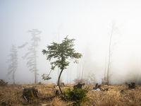 Fog in autumnal forest in Austria