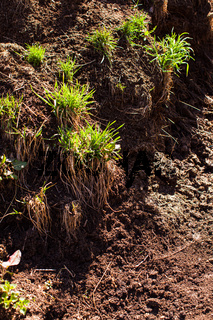 Green grass at the pile of manure - cow dung
