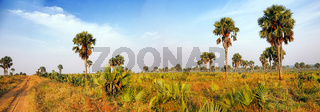Palmenlandschaft im Murchison Falls Nationalpark Uganda, Panorama | Landscape with palms at Murchison Falls National Park Uganda