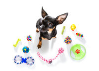 dog with pet toys on white