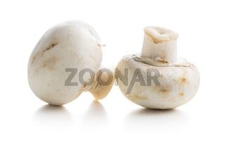 Fresh white champignon mushrooms