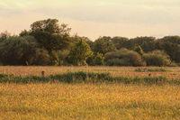 Abendstimmung im Naturschutzgebiet Ilkerbruch