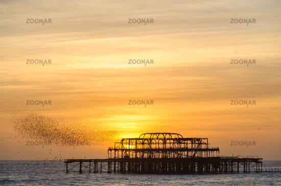 Flock of starlings over the west pier in Brighton