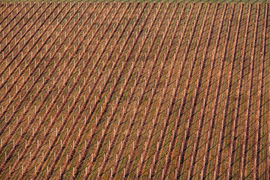 Aerial View of a Vineyard in Australia