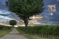 Weinberge und Bäume