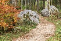Wanderweg im Zauberwald in Bayern