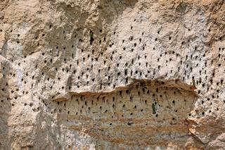 Löcher im Lehm als Bruthöhlen für Bienenfresser, Murchison Falls Nationalpark   Holes in the clay as breeding caves for bee-eaters, Murchison Falls National Park Uganda