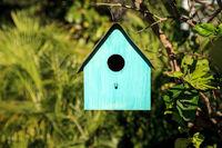 Aqua blue metal birdhouse hangs from a lemon tree
