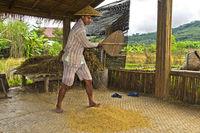 Junger Mann trennt die Spreu vom Reis mit einem Handfächer, Luang Prabang, Laos