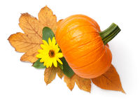 Fresh Orange Pumpkin And Sunflower