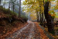 Autumn landscape with trees and Autumn leaves on the ground after rain