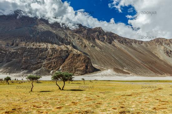 Landscape of Nubra valley. Hunber, Nubra valley, Ladakh, India