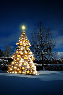 Christmas tree with lights on white snow. Christmas Card.