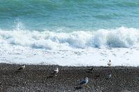 seagull at the blue sea