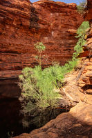 Kings Canyon in center Australia