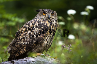 Huge eurasian eagle-owl sitting on a rock in summer forest