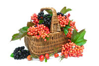 basket with berries close up on white background