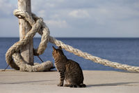 Port cat basking in sun and rope on seafront in sunny summer day