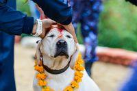 Dog festival Kukur Tihar in Kathmandu, Nepal