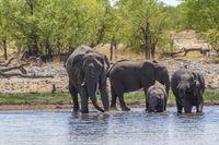 Elefanten, Etosha-Nationalpark