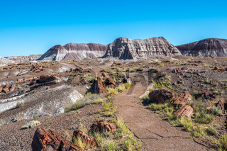 A gorgeous view of the landscape in Petrified Forest National Park, Arizona