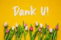 Colorful Tulip, Text Dank U Means Thank You, Yellow Background