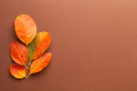 Autumn Minimal Composition With Fresh Orange Leaves