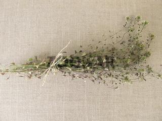 Getrocknetes Hirtentäschelkraut Wildkräuter