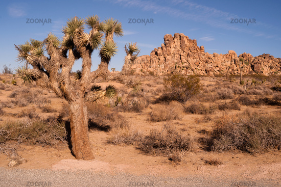 Joshua Tree With Rock Formation Landscape California National Park