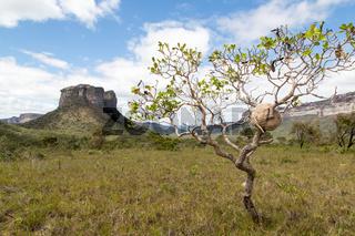 Tafelberg im Chapada Diamantina National Park